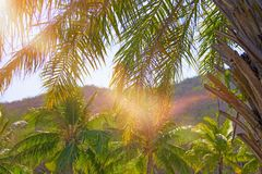 High, beautiful palm trees, clear sky, the sand, the warm tropics. royalty free stock photo