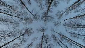 High birch autumn. Nature forest trees branches height sky Stock Photo