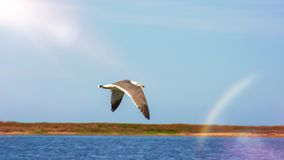 High blue sky flying white seagulls hovering over the sea. a sunny day royalty free stock image