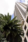High building and palm tree Stock Photography