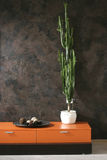 High cactus. On the chest of drawers Stock Photo