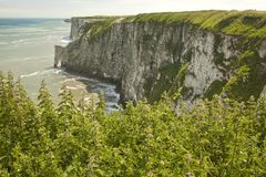 High chalk cliffs,Bempton,Yorkshire, England. Stock Images