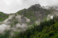 High cliffs. In the mountains with evening fogs Stock Photos