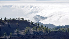 High Clouds over Pine Cone Trees Forest in Tenerife Island Stock Image