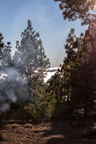 High clouds over pine forest on Tenerife Royalty Free Stock Image