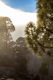 High clouds over pine forest on Tenerife Royalty Free Stock Photography