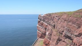 High coast cliff on Helgoland island with flying seabirds stock video