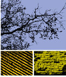 High contrast backgrounds. A collection of 3 different abstract, high contrast backgrounds, one of silhouetted tree branches, one of a brick wall and one of Royalty Free Stock Photography