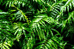 High contrast concept background and texture of green color fern Stock Photography