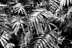 High contrast concept background and texture of green color fern Stock Image