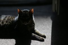 High contrast details of a house cat sitting on a rug and enjoying the sun rays entering inside the room.  stock photo