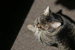 High contrast details of a house cat sitting on a rug and enjoying the sun rays entering inside the room.  royalty free stock photo