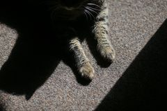 High contrast details of a house cat sitting on a rug and enjoying the sun rays entering inside the room.  royalty free stock photography