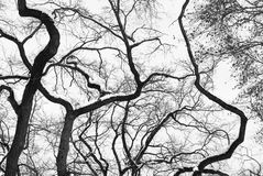 High Contrast Forest Silhouette Royalty Free Stock Images