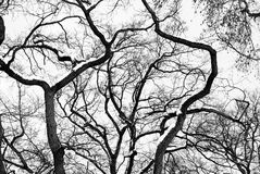 High Contrast Forest Silhouette Stock Images