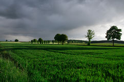 High contrast green agricultural area Stock Images