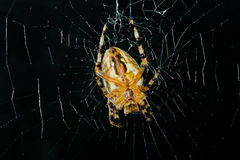 High contrast image of very dreadful spider. On his net in night darkness Royalty Free Stock Images