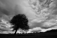 High contrasted tree and clouds landscape Royalty Free Stock Photography