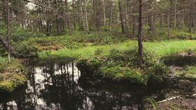 High definition footage of the swamp in the forest. High definition footage of the swamp in the forest with a reflection of the trees stock footage