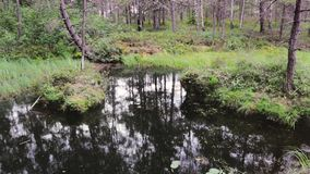 High definition footage of the swamp in the forest. High definition footage of the swamp in the forest with a reflection of the trees stock video footage