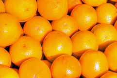 High Definition Image of Florida Oranges Stock Photography