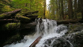 High definition movie of impressive Panther Creek Falls with plunging water audio sounds in Washington State 1080p hd stock video