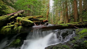 High Definition Movie of Long Exposure Water Flowing at Panther Creek Falls in Skamania County Washington 1920x1080.  stock video footage