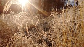 Frozen dew morning melt Royalty Free Stock Photo