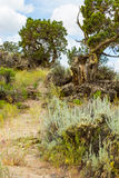 High Desert Hiking Trails Stock Images