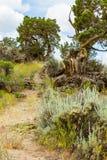 High Desert Hiking Trails Stock Images