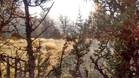 Frozen dew juniper tree pasture stock photography