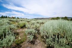 High desert sagebrush and creosote bushes through a trail. Taken in Miners Delight Wyoming. In summer stock photo