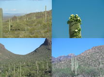 High desert with saguaro cactus collage and mountains Stock Photos