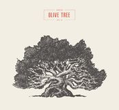 High detail olive tree, hand drawn, vector. High detail illustration of an old olive tree, hand drawn, vector vector illustration