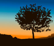 High Detail Tree. Against sunset Stock Images