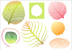 High detailed leaf Royalty Free Stock Image