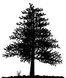 High detailed tree silhouette on white background. Stock Image