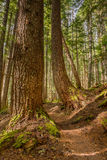 High Divide/Seven Lakes Trail, Olympic National Park, WA Royalty Free Stock Image