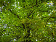 High drammatic trees in the forest during the day Royalty Free Stock Images