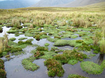 High Elevation Wetlands in the Cordillera Blanca, Peru. This raised bog, a wetland type found on plateaus, in this case at 13,000 feet elevation, are a unique Royalty Free Stock Photos