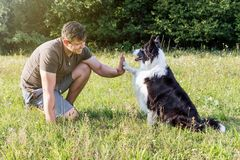 High five with the cute Border Collie Royalty Free Stock Image