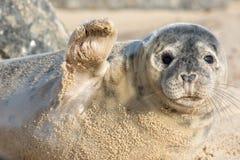 High five. Cute seal waving hi. Funny animal meme image