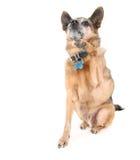 High five dog Royalty Free Stock Photos
