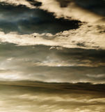 High Flyer. Solitary bird flying high in stormy sky at sunset Stock Image