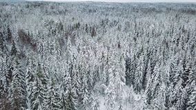 High flying camera tilt up over large woods in the cold winter stock video footage