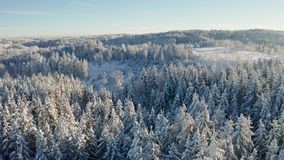 High flying camera tilt up over large frozen wood landscape in the cold winter stock video footage