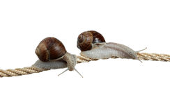 High-flying snails Stock Images