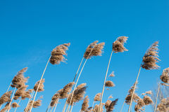 High grass. Against the sky Stock Images
