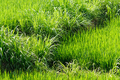 High grass background. Green grass natural abstract background Stock Photography