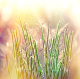 High grass Royalty Free Stock Images